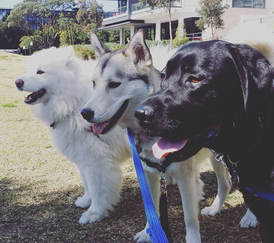 Prices puppy playground dog daycare dog grooming services sydney solutioingenieria Choice Image